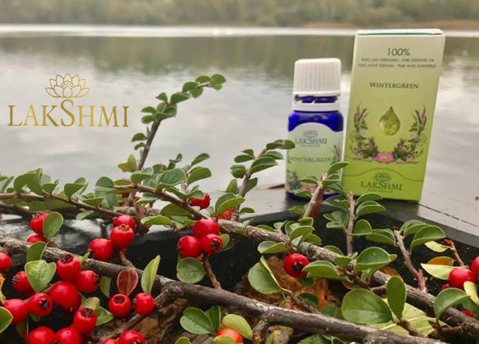 —Nieuwe Etherische Olie—Wintergreen—Wintergroen—